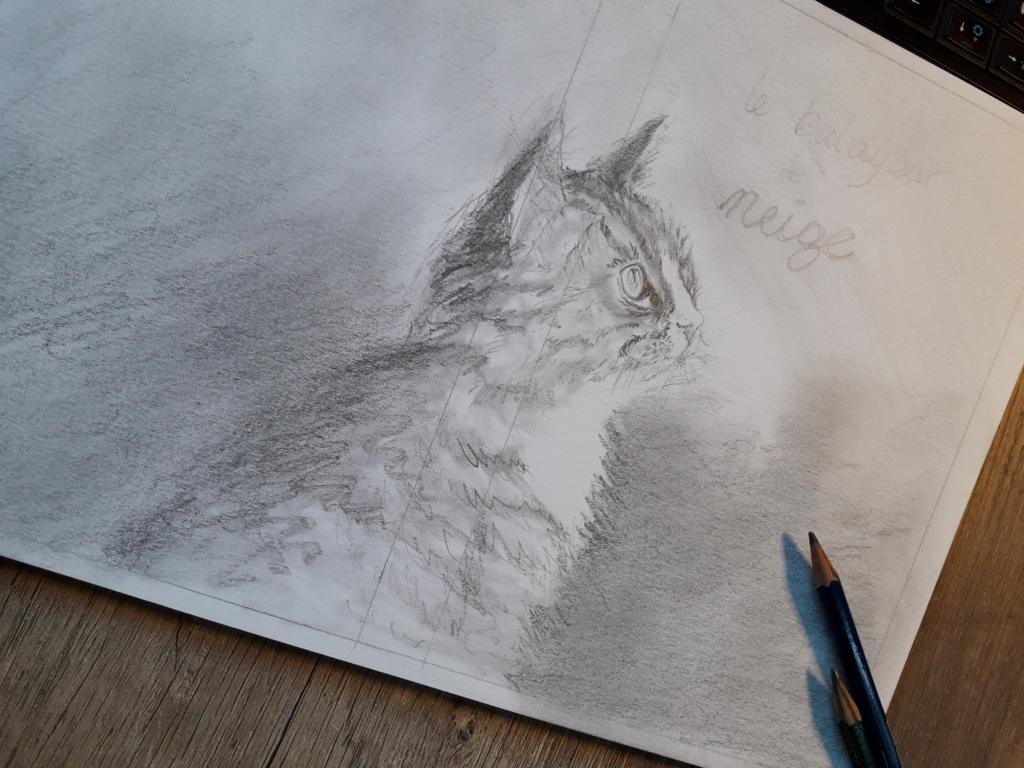 Couverture chat
